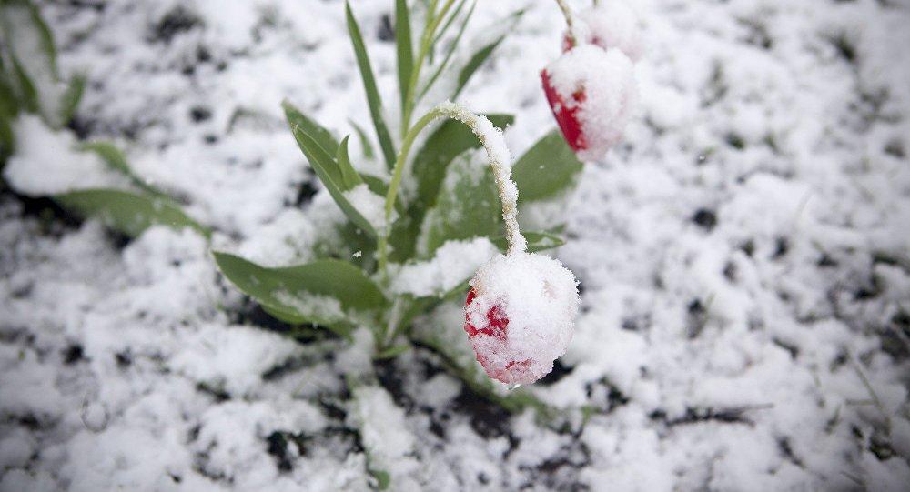 Снег в мае 2017 года. Погода балуется
