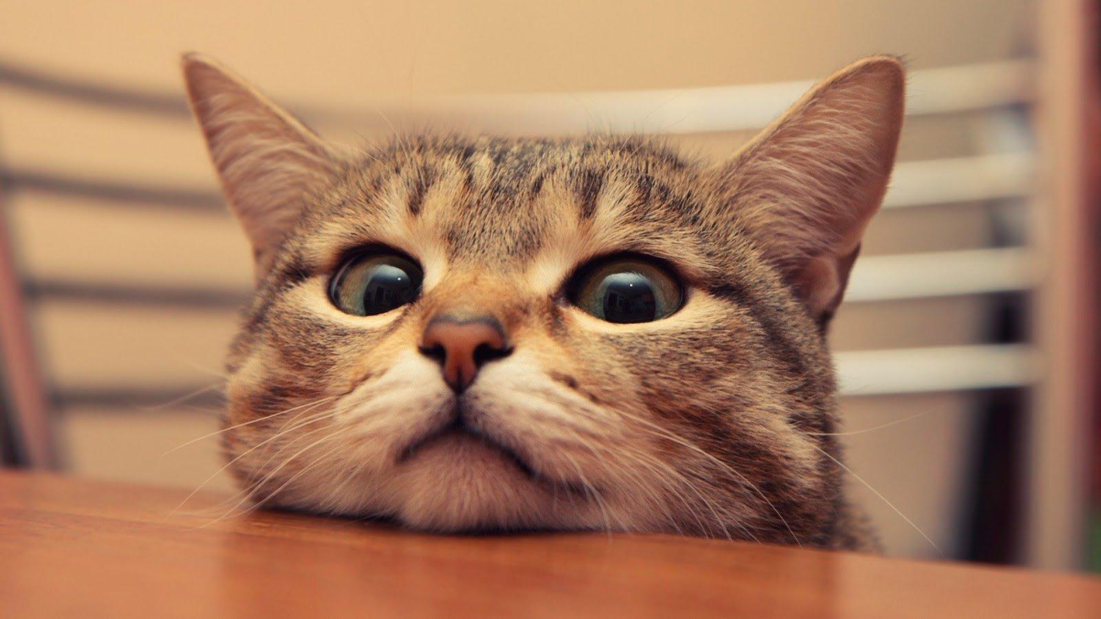 Когда кот знает ПДД)